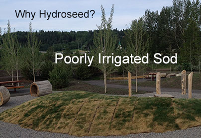 Example of sod use